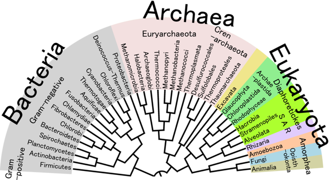 800px-phylogenetic_tree_of_life.png