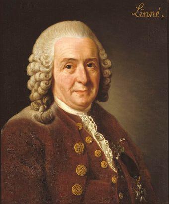 Carl_von_Linné (1)