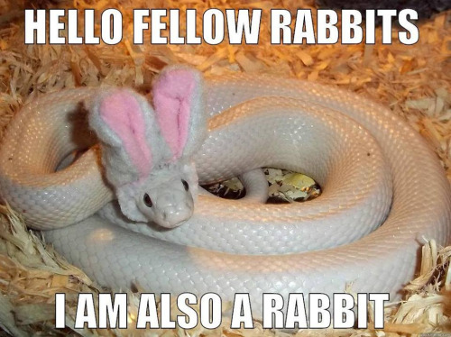 Hello-Fellow-Rabbits-I-Am-Also-A-Rabbit-Funny-Snake-Meme-Picture