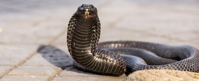 2720_reptiles.jpg