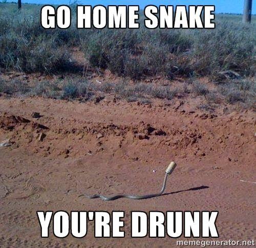 Funny-Snake-Meme-Go-Home-Snake-You-Are-Drunk-Image