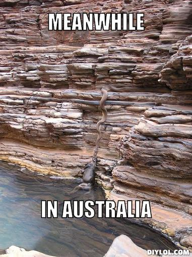 Funny-Snake-Meme-Meanwhile-In-Australia-Image