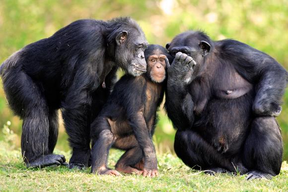 rich-shouts-gorilla-580.jpeg